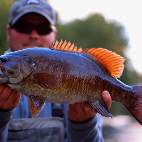 Minnesota and Wisconsin Guided Fly Fishing Smallmouth Bass Trips