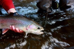 WebsiteSteelhead