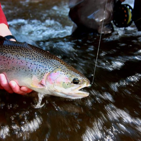 Minnesota and Wisconsin Fall Steelhead and Musky Fishing